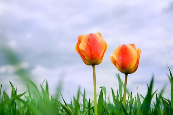 Два цветка.jpg
