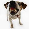 Обменник - последнее сообщение от dogod