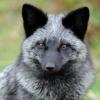 Петличная эмблема моряков РИФ - последнее сообщение от Gray Fox