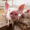 Медаль МВД - последнее сообщение от ВасилийVasyliy